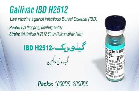 Gallivac IBD H2512!