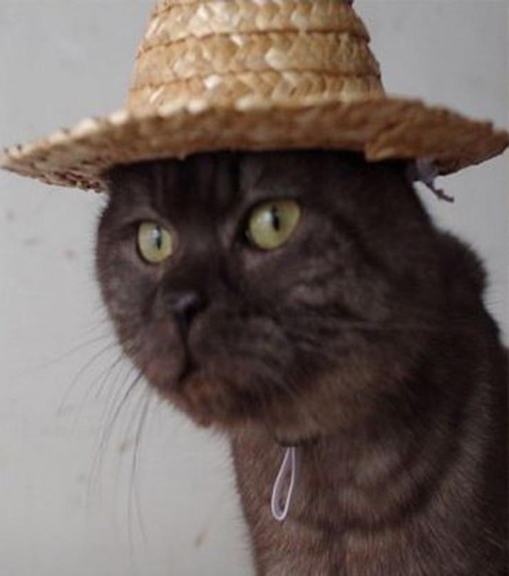 pets hat!