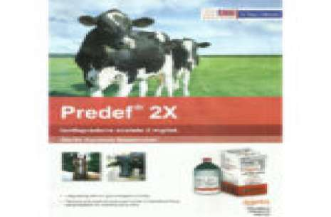 Predef 2x – 100 Ml Injection!