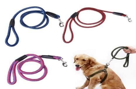 Nylon Dog Collar!