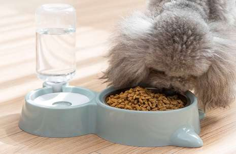 Pet Food and Water Dispenser 2 kg!