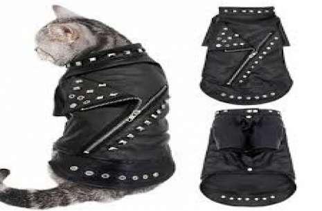 Cat Jacket S!