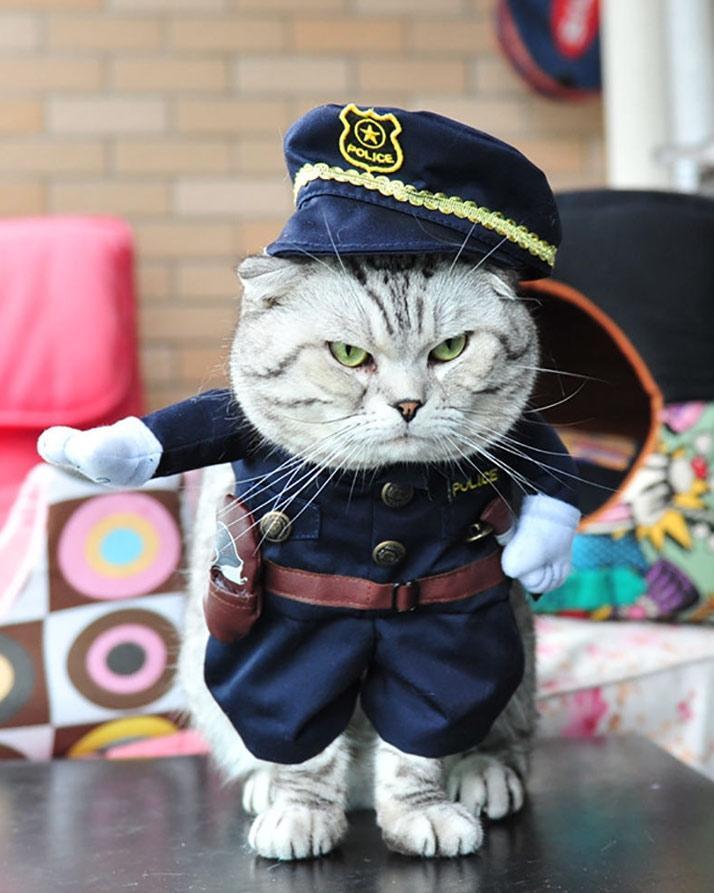 cat dog costume!