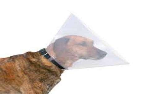 Trixie Protective Collar – E Collar For Dogs!