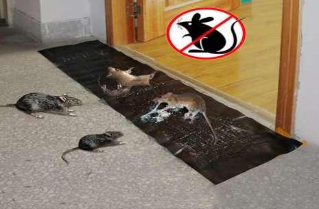 Rat/Mice Traps Mat!